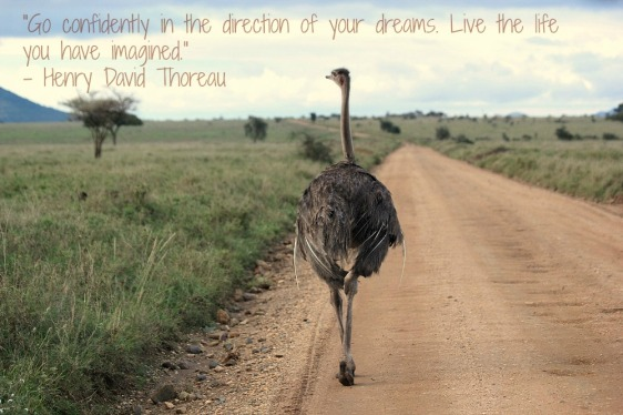 Gratuitous safari picture!